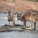 Kangaroo Island-0997