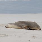 Kangaroo Island-0853