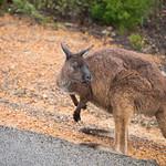 Kangaroo Island-0989