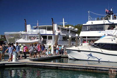 Dolphin cruise port stephens 3
