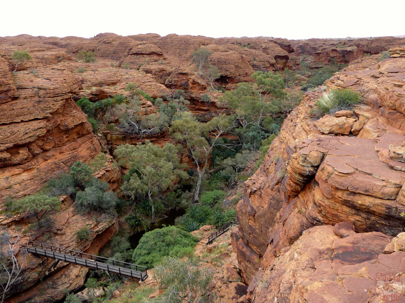 Kings Canyon Hike- Garden of Eden - Australia 15