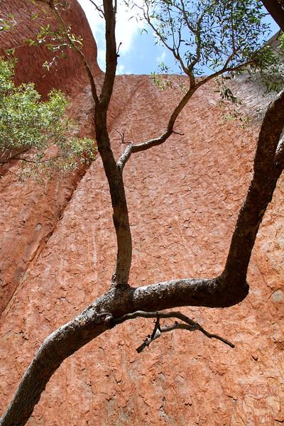 Uluru base walk photo 8