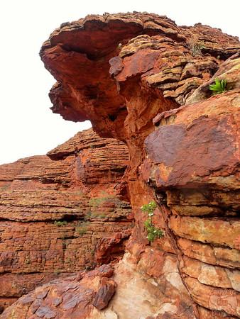 Kings Canyon Hike - Australia 10