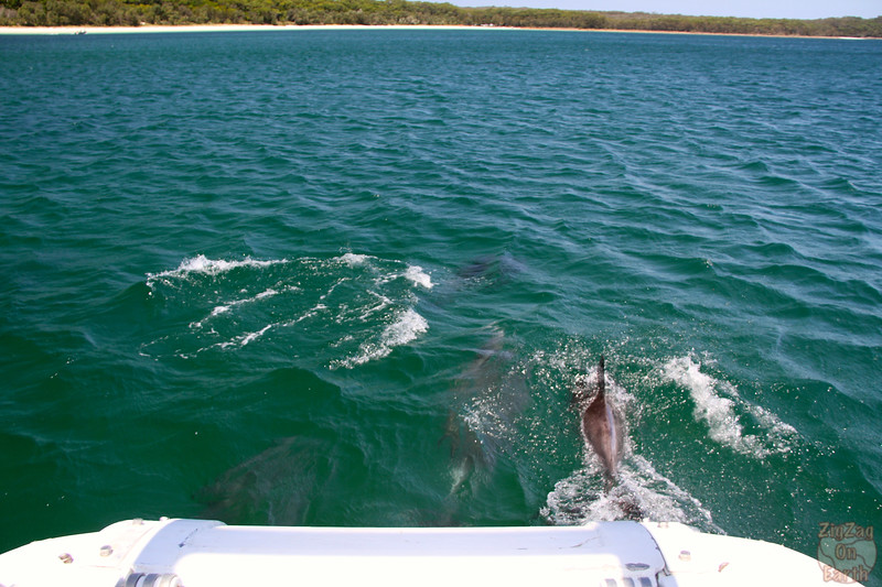 Dolphins in Jervis Bay 9