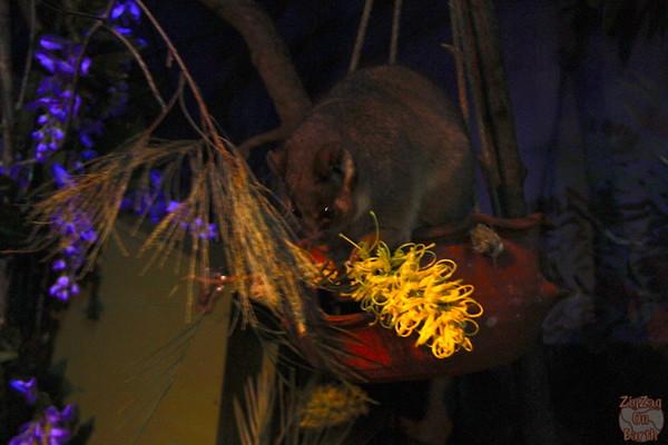 Kepper at nocturnal habitat Sydney Taronga zoo