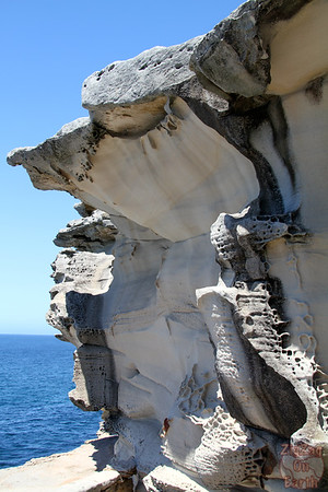Bondi to Cogee walk: rocks 3