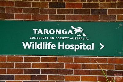 Visiting the hospital as keeper for a day at Sydney Taronga zoo
