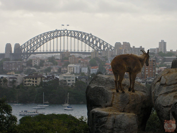 View of the Harbour Bridge from the Sydney Taronga Zoo