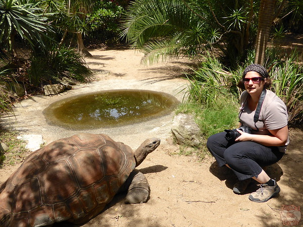 Meeting a tortoise as keeper for a day at Sydney Taronga zoo