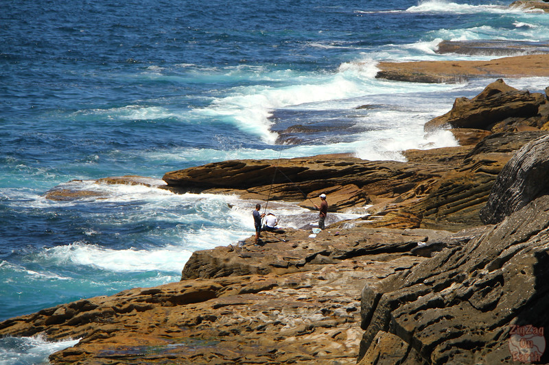 Bondi to Cogee walk: Cliffs 4
