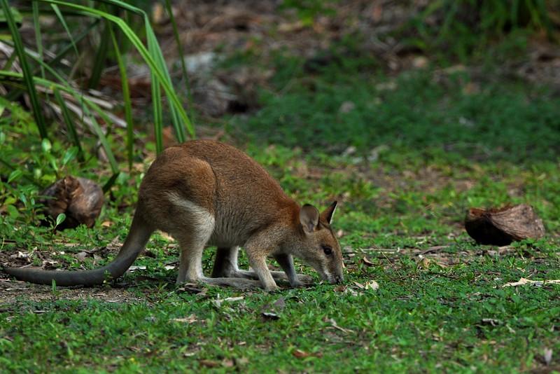 Australia '14 -  318