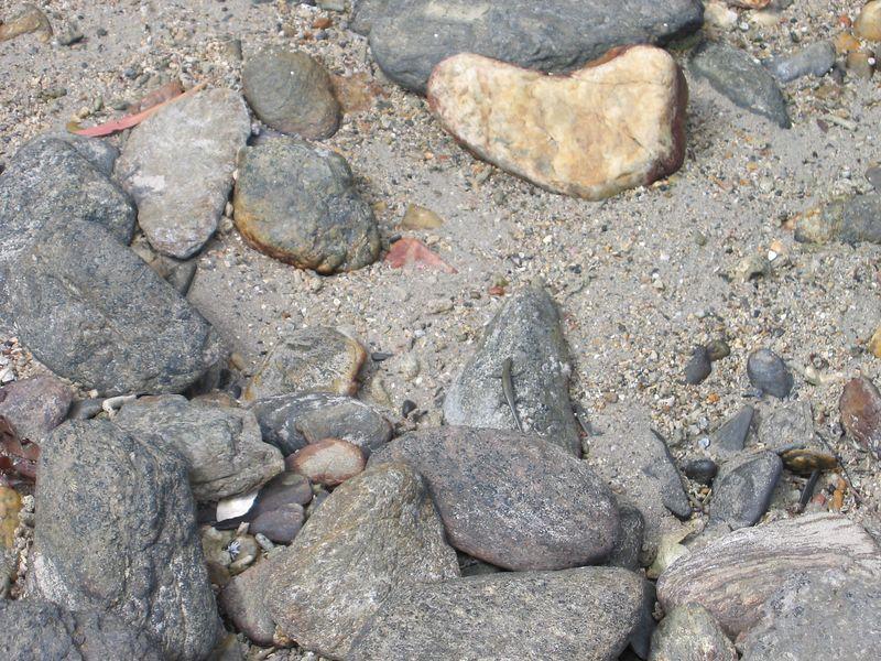 Beach Lizard, Dunk Island