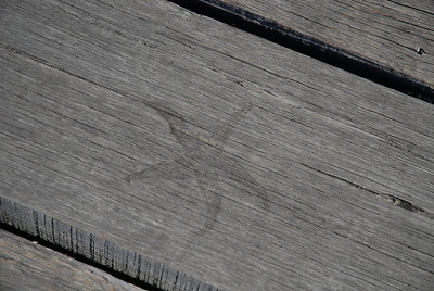 Starfish imprint on wooden plank, Melbourne Pier