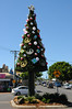 A Christmas tree, Byron Bay style