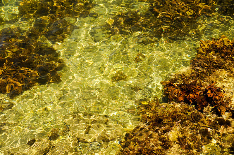 The water at Little Manly Cove <br /> So clear....