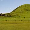 Sheep grazing on hillside.