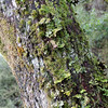 Moss and plants on tree.
