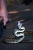 Snake not keen on being rescued