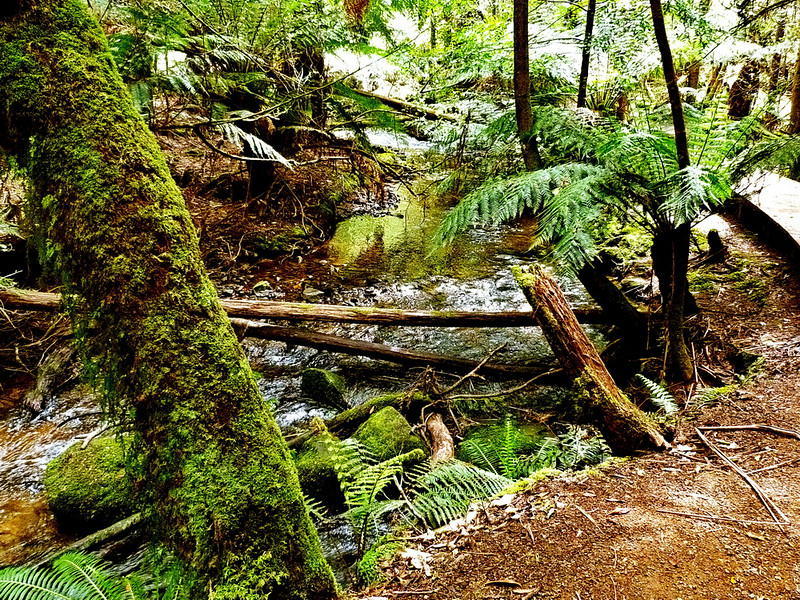 Australia, Tasmania, Mount Field National Park
