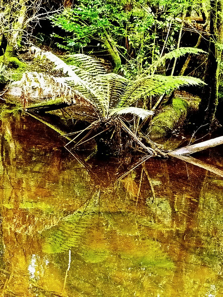 Australia, Tasmania, Mount Field National Park