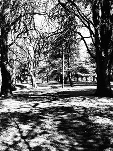 Telopea Park, Kingston