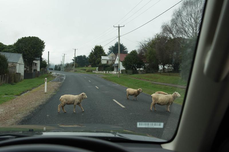 Road in Tasmania