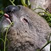 Werribee Zoo Melbourne Australia