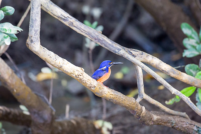 On the Daintree River
