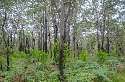 Ferns and Wood