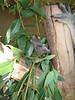 Koala feet.