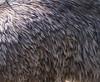 Emu feathers.