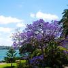 November.... Spring in Sydney.