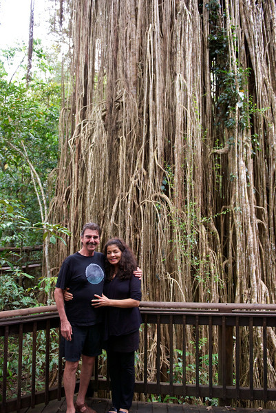 There is a walkway around it so visitors don't damage its roots.  Richard and Tatiana help give it a sense of scale.