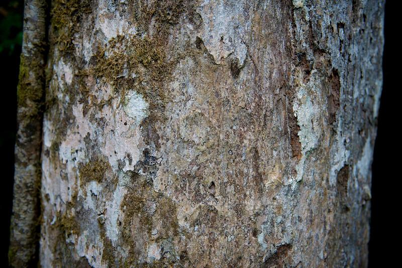 One day we went to Kuranda.  Here are some bark shots from a walk near Kuranda.