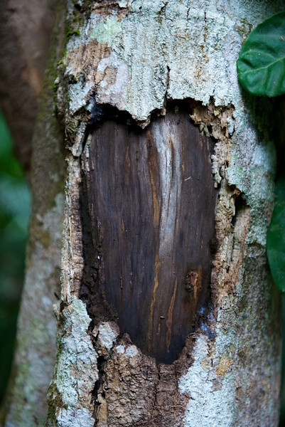 Someone carved a heart into one of the trees.