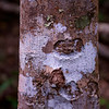 The bark, lichen, and molds had colors reminiscent of Aboriginal paintings.