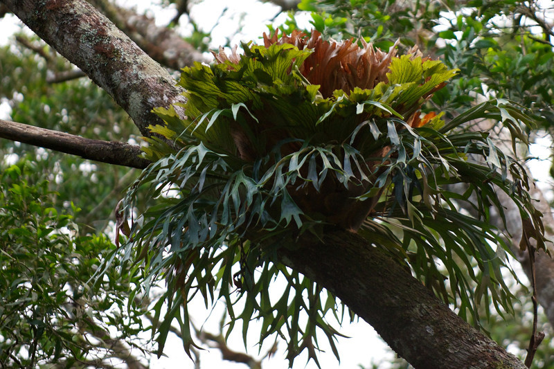 In the rainforest it is difficult to say what is a parasite when everything is growing on everything else.