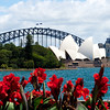 The opera house over a display of canna lilies in the botanic gardens.