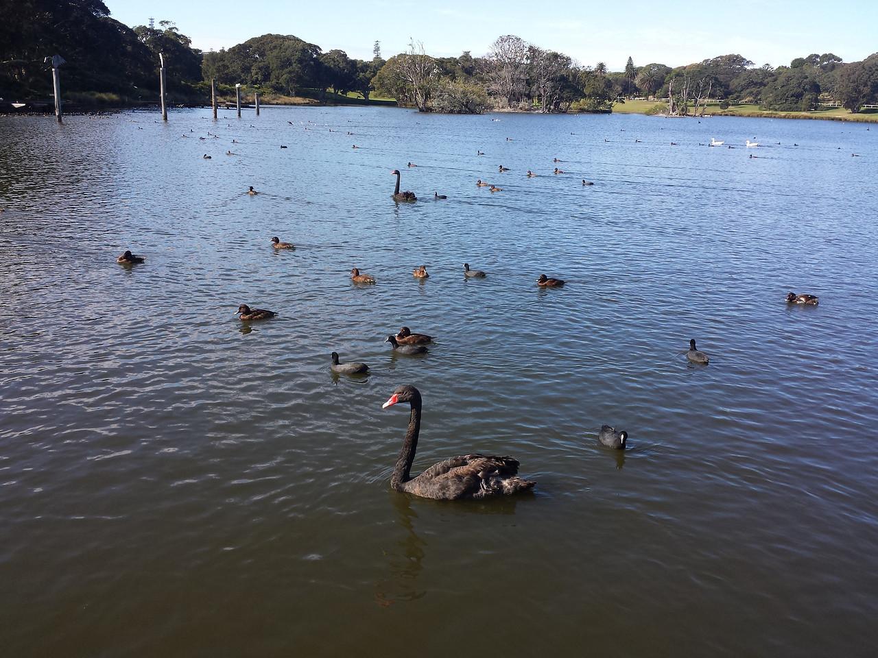 Centennial Park Duck Pond