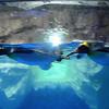 Kelly Tarlton's Sealife Aquarium. Penquin Ice Caves. Penquin Display in Ice Caves