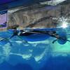 Kelly Tarlton's Sealife Aquarium Penquin Display in Ice Caves