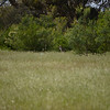 Kangaroos way in the back.  Try enlarging the photo by rolling your mouse pointer over the picture.