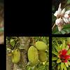 Queensland flora