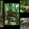Flora of the Daintree Rainforest