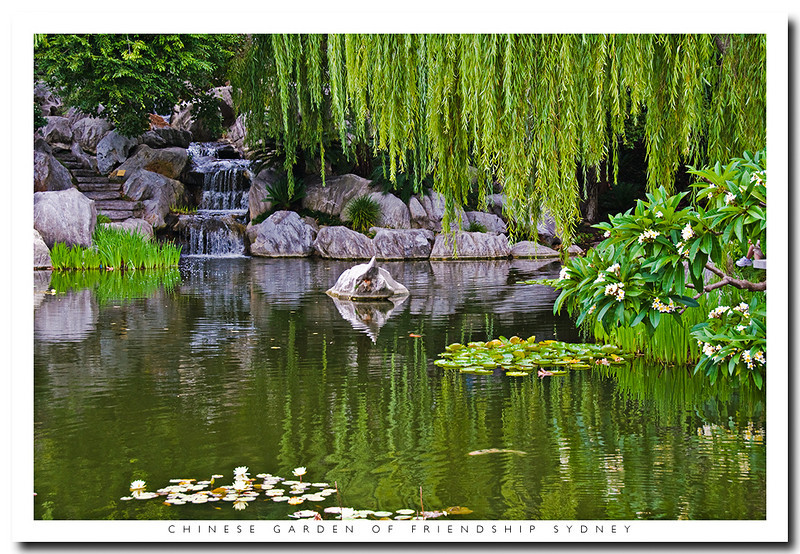 Pond in the Chinese Garden of Friendship, Darling Harbour, Sydney, Australia