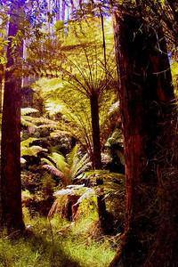 Mountain Ferns near Melbourne