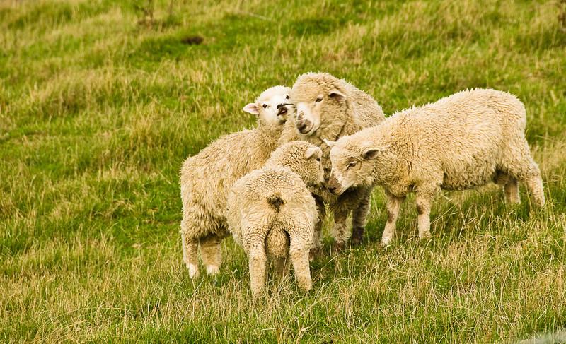 File Ref:2009-03-01 Christchurch-02 880A