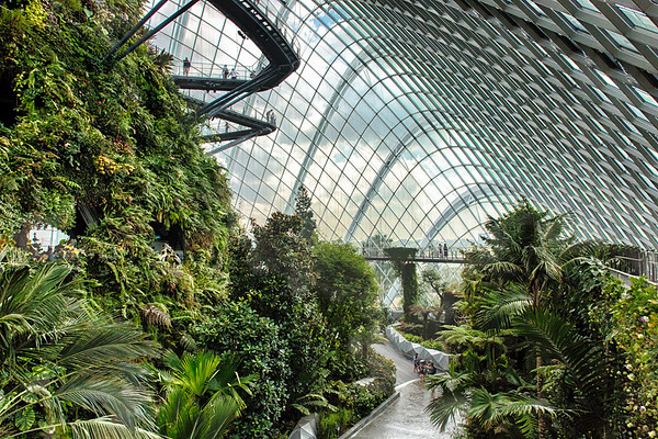 Cloud Forest World