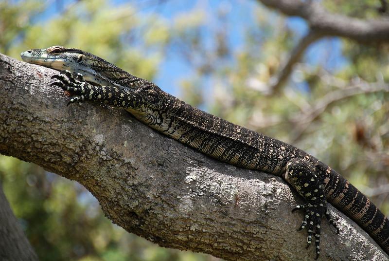 Illaroo campsite, Yuraygir NP,  NSW