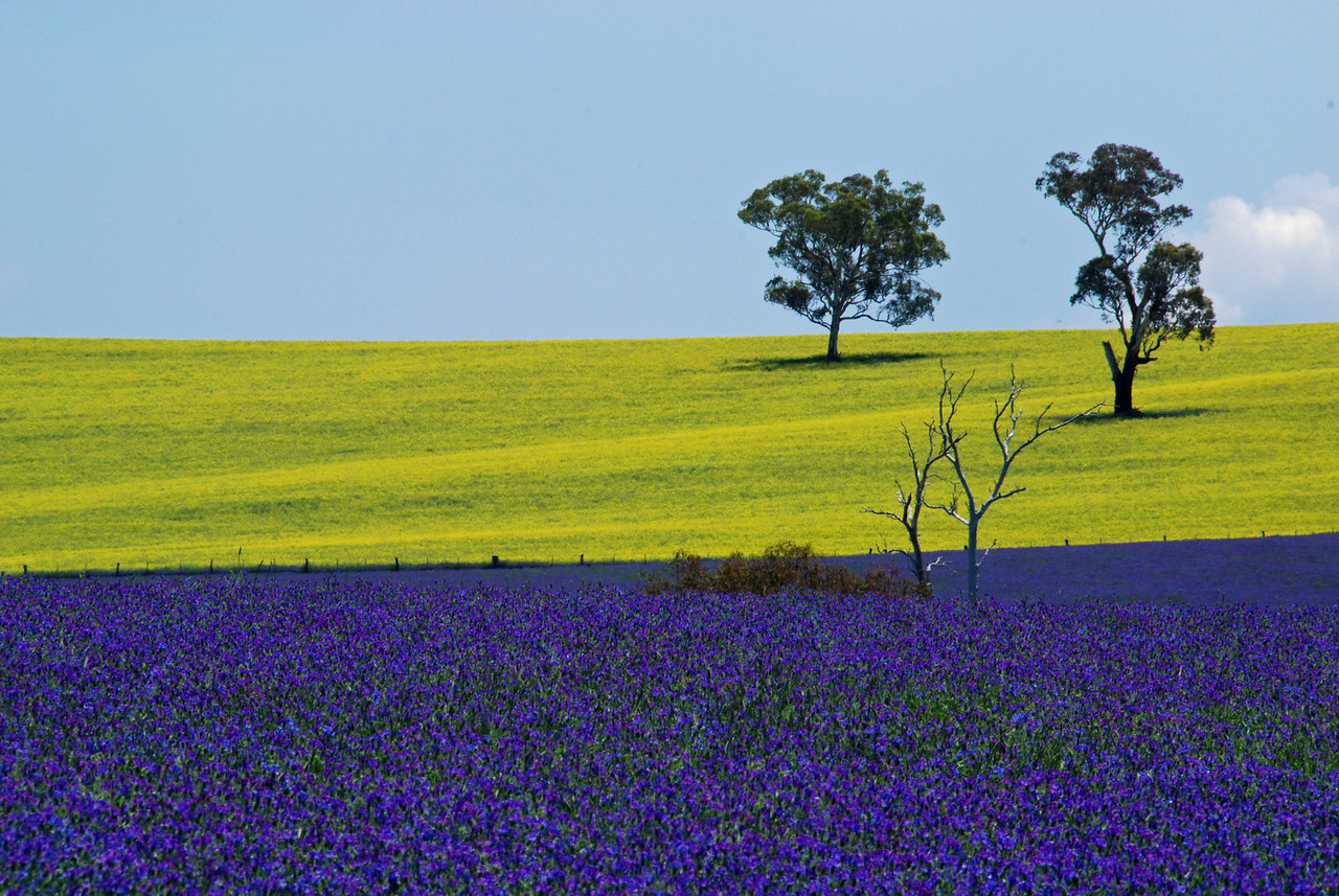 Nr. Bathurst, NSW